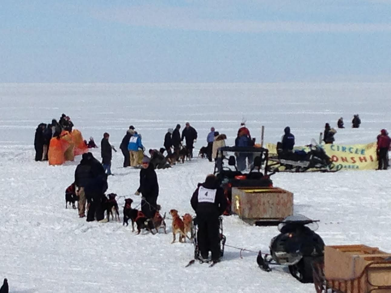 Alaska dog sled race