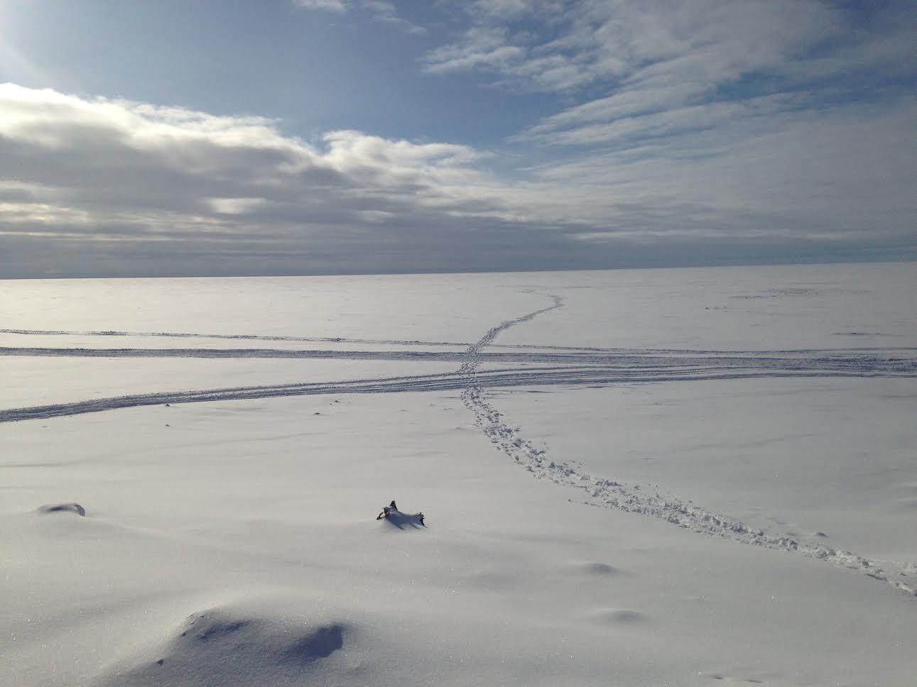 Alaska tracks near front street kotz