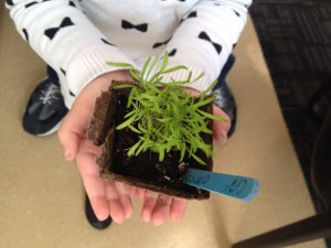 Child's hands holing a seedling in a small pot.